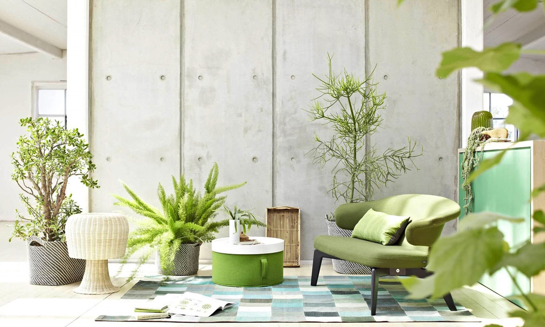 Legénylakások túlélői – 10 szobanövény, amelyek kevés törődéssel is csodaszépek maradnak